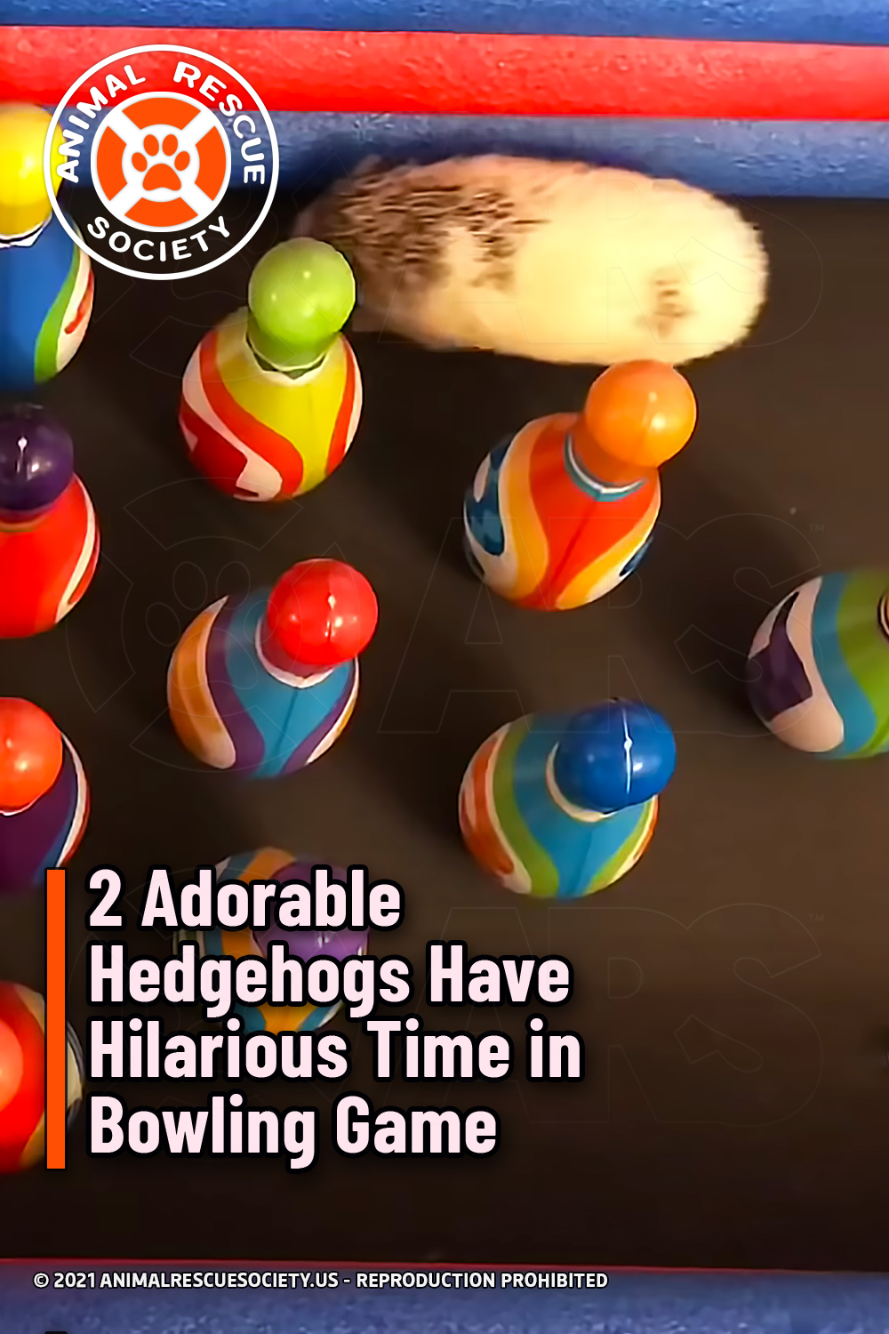 2 Adorable Hedgehogs Have Hilarious Time in Bowling Game