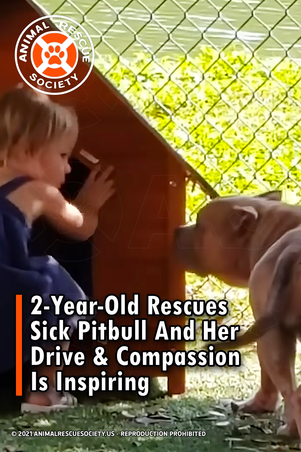 2-Year-Old Rescues Sick Pitbull And Her Drive & Compassion Is Inspiring