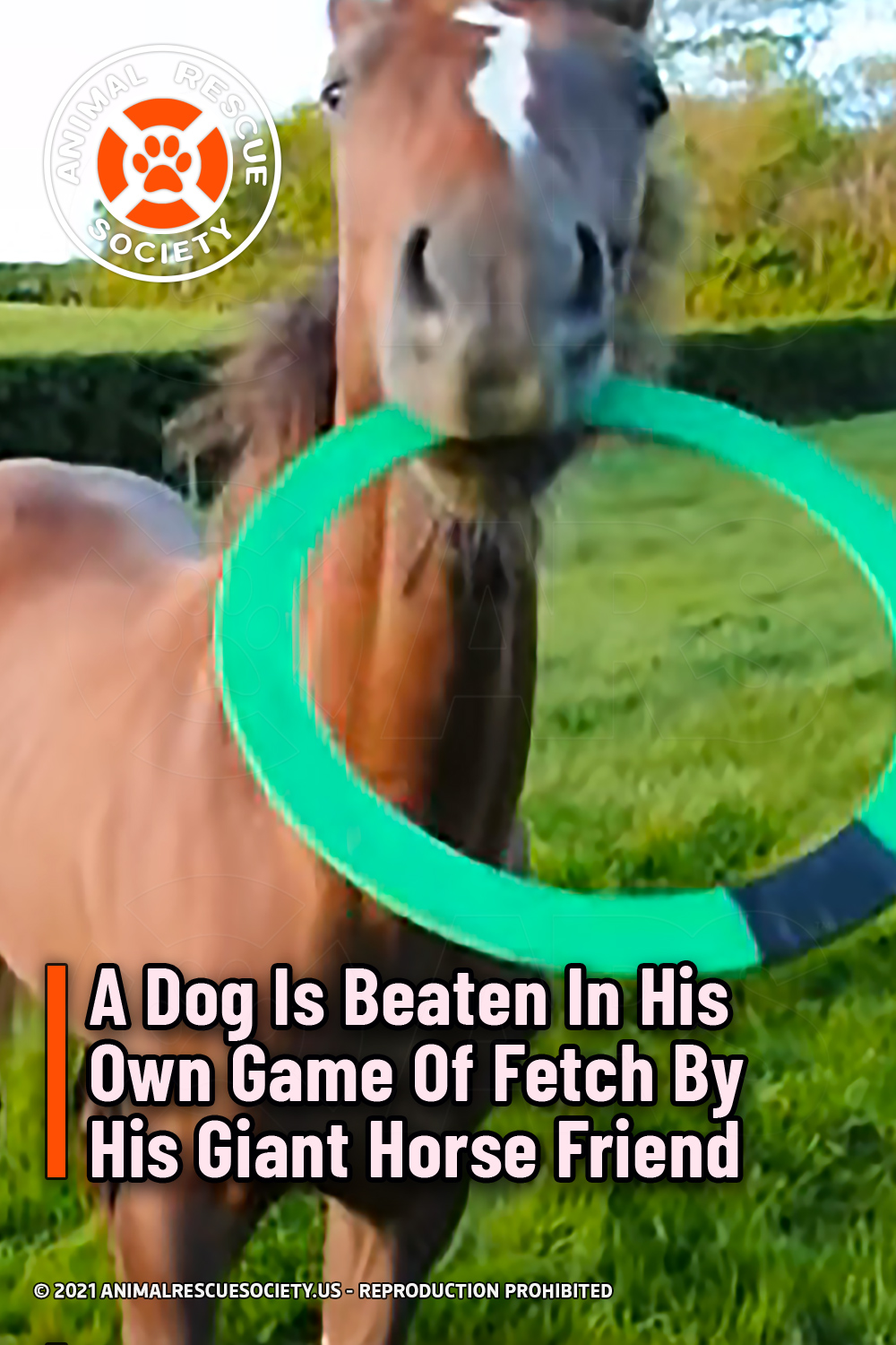 A Dog Is Beaten In His Own Game Of Fetch By His Giant Horse Friend
