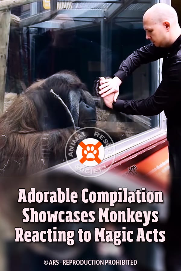 Adorable Compilation Showcases Monkeys Reacting to Magic Acts