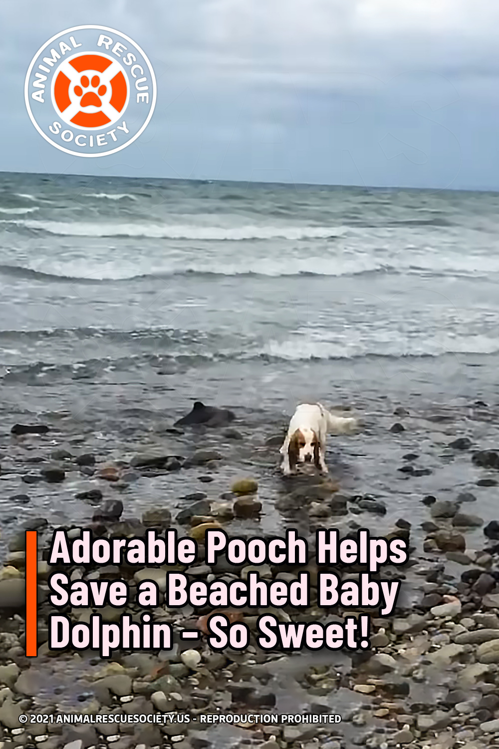 Adorable Pooch Helps Save a Beached Baby Dolphin – So Sweet!