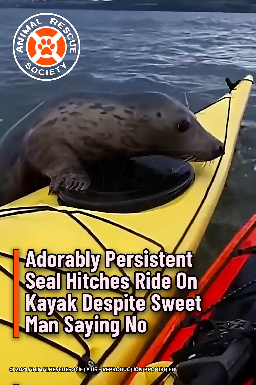 Adorably Persistent Seal Hitches Ride On Kayak Despite Sweet Man Saying No