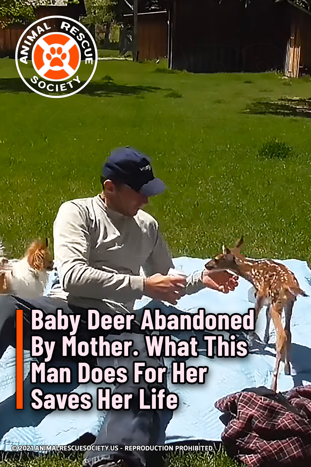 Baby Deer Abandoned By Mother. What This Man Does For Her Saves Her Life