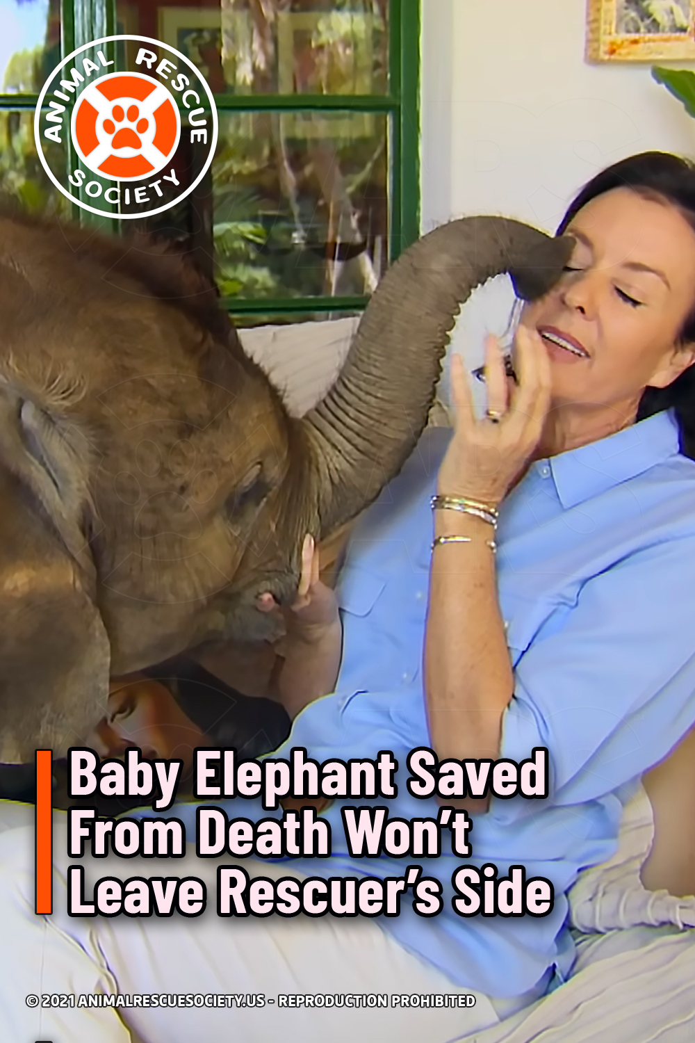 Baby Elephant Saved From Death Won't Leave Rescuer's Side