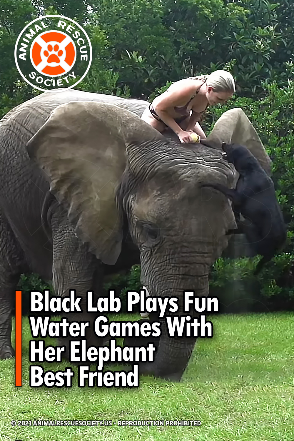 Black Lab Plays Fun Water Games With Her Elephant Best Friend