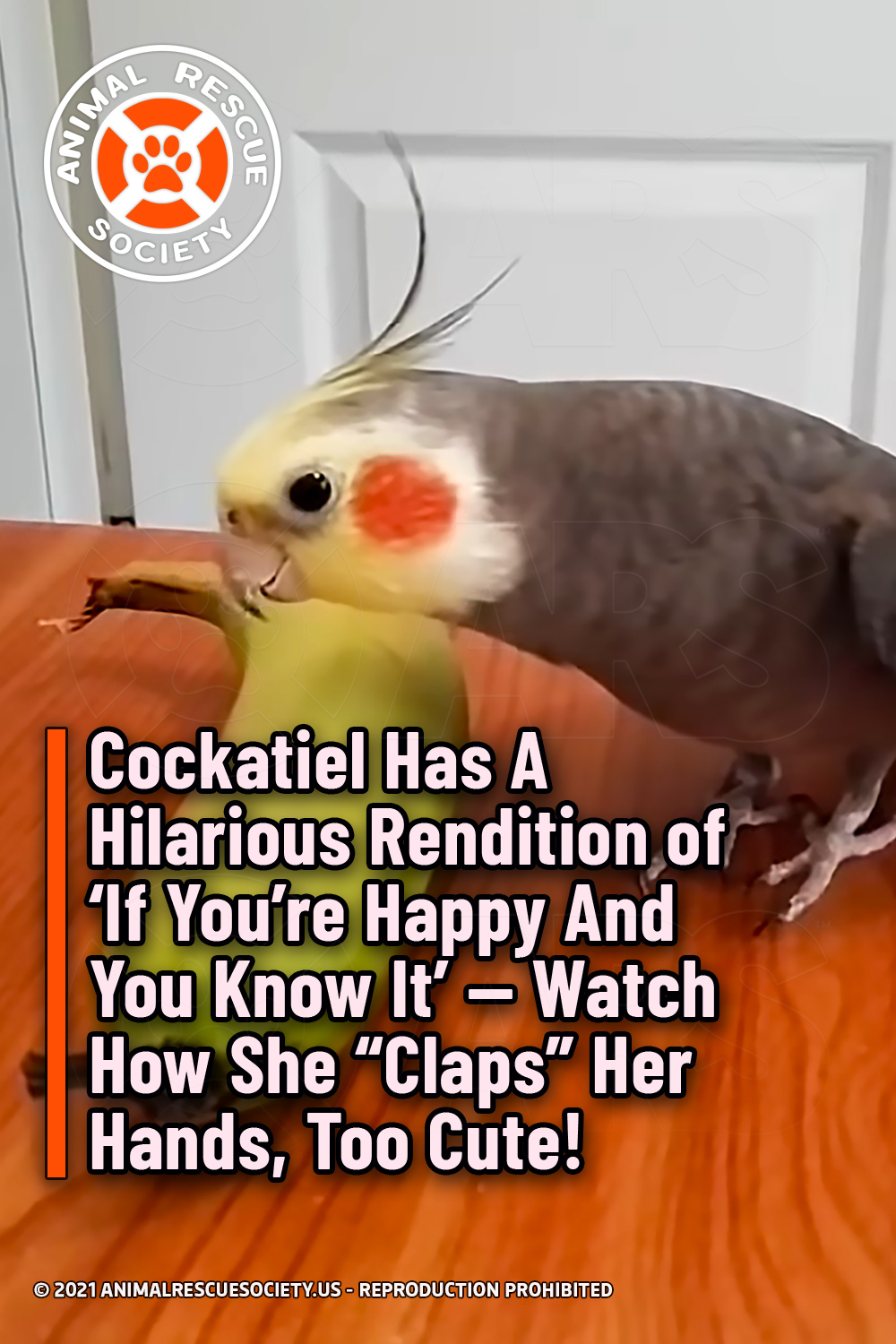 "Cockatiel Has A Hilarious Rendition of 'If You're Happy And You Know It' — Watch How She ""Claps"" Her Hands, Too Cute!"