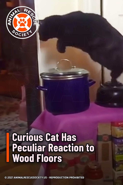 Curious Cat Has Peculiar Reaction to Wood Floors