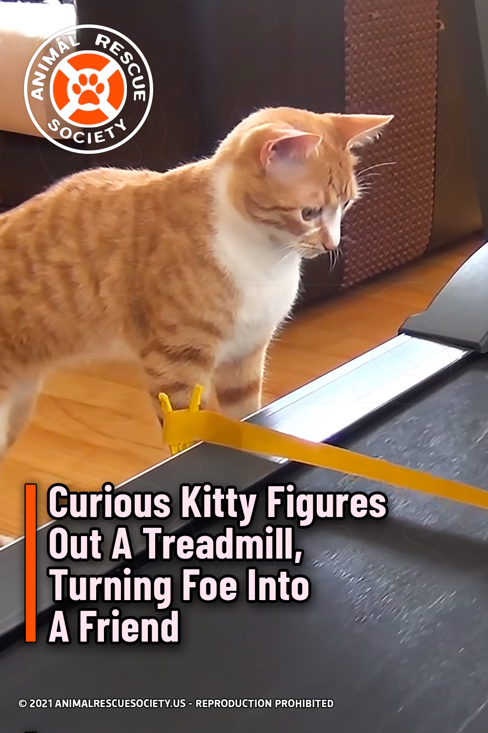 Curious Kitty Figures Out A Treadmill, Turning Foe Into A Friend