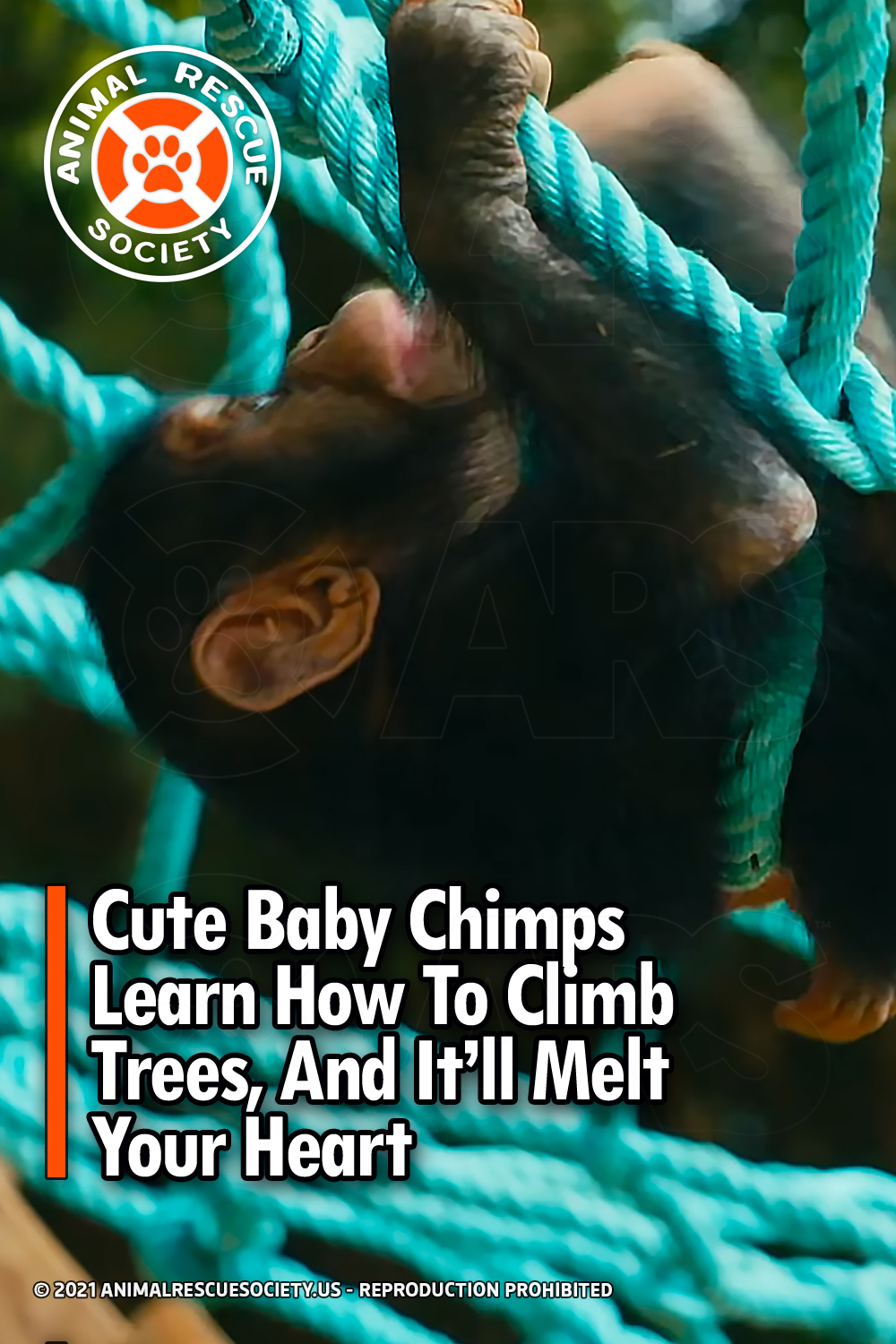Cute Baby Chimps Learn How To Climb Trees, And It'll Melt Your Heart