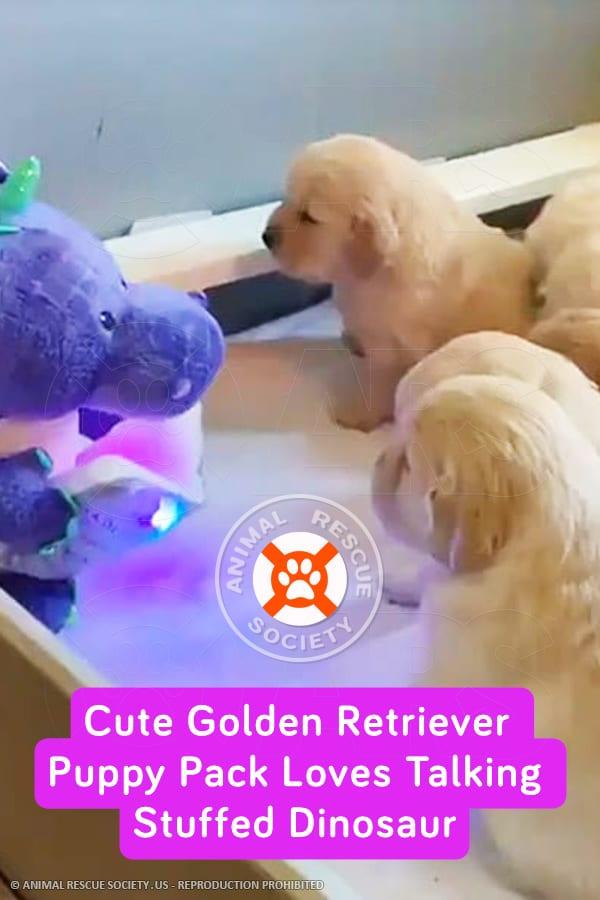 Cute Golden Retriever Puppy Pack Loves Talking Stuffed Dinosaur