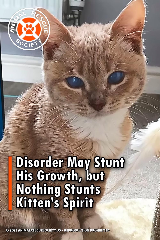 Disorder May Stunt His Growth, but Nothing Stunts Kitten's Spirit