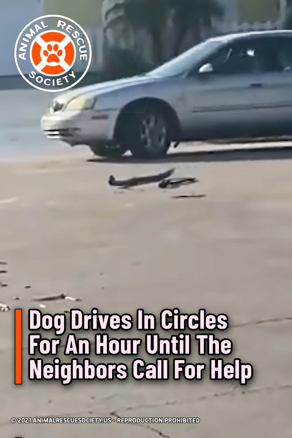 Dog Drives In Circles For An Hour Until The Neighbors Call For Help