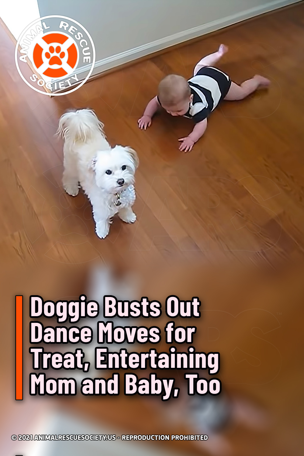 Doggie Busts Out Dance Moves for Treat, Entertaining Mom and Baby, Too