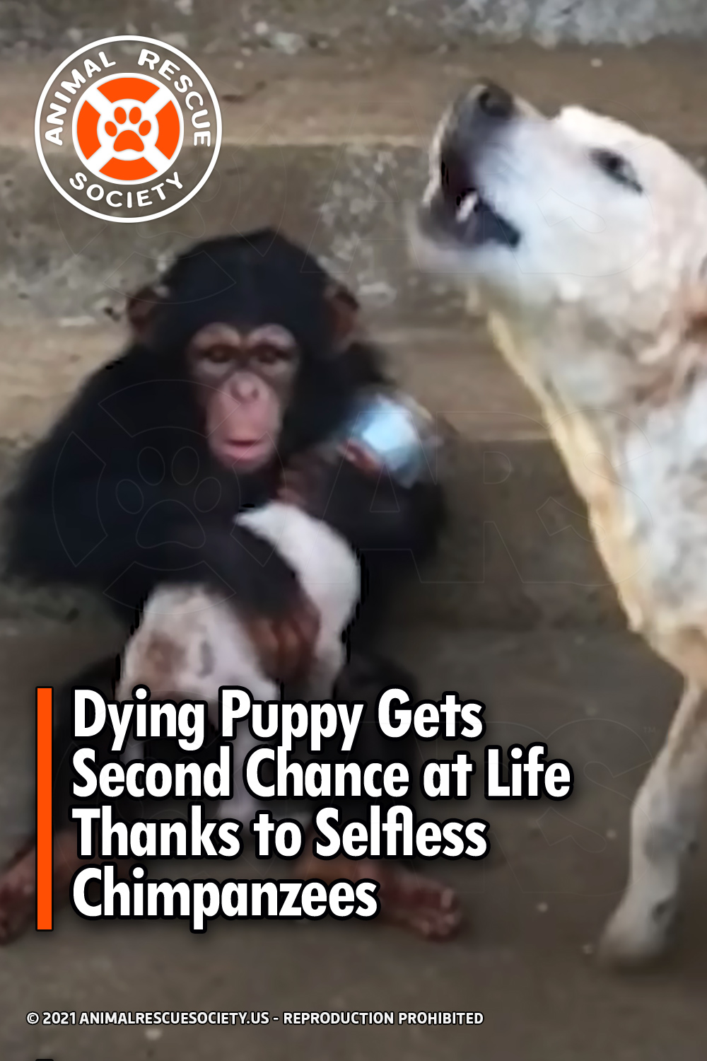 Dying Puppy Gets Second Chance at Life Thanks to Selfless Chimpanzees