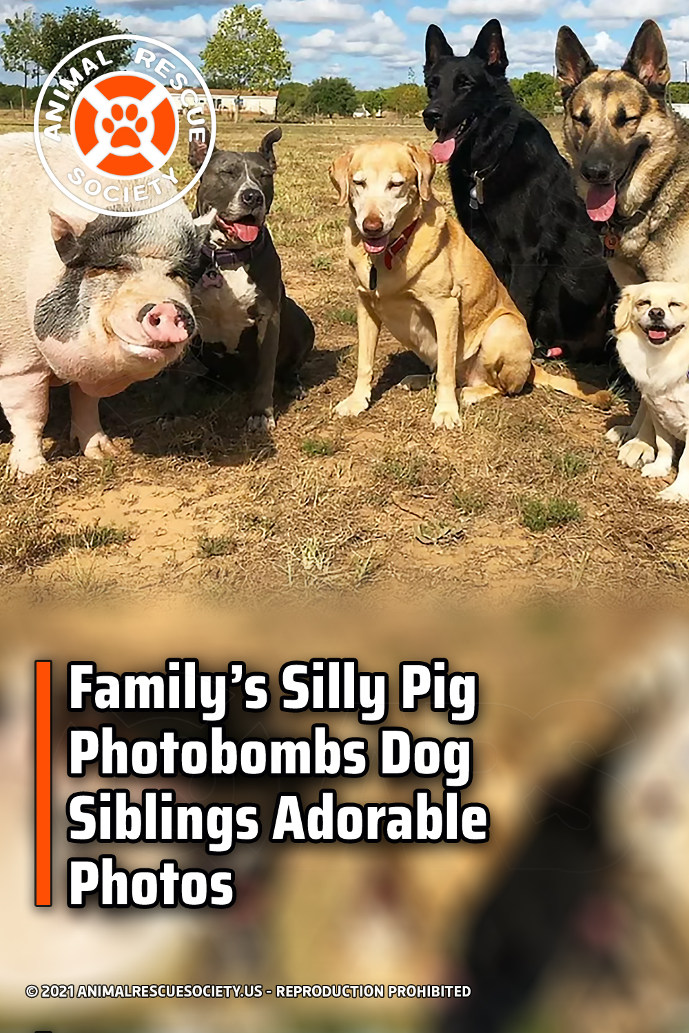 Family's Silly Pig Photobombs Dog Siblings Adorable Photos