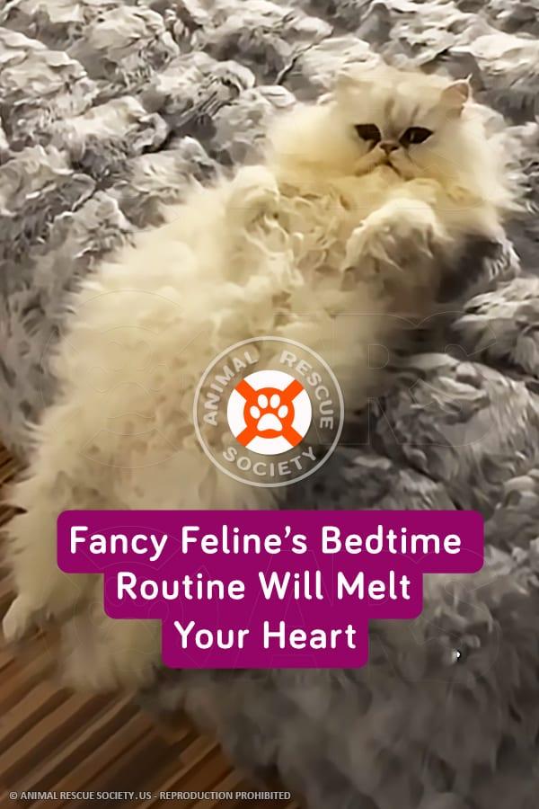 Fancy Feline's Bedtime Routine Will Melt Your Heart