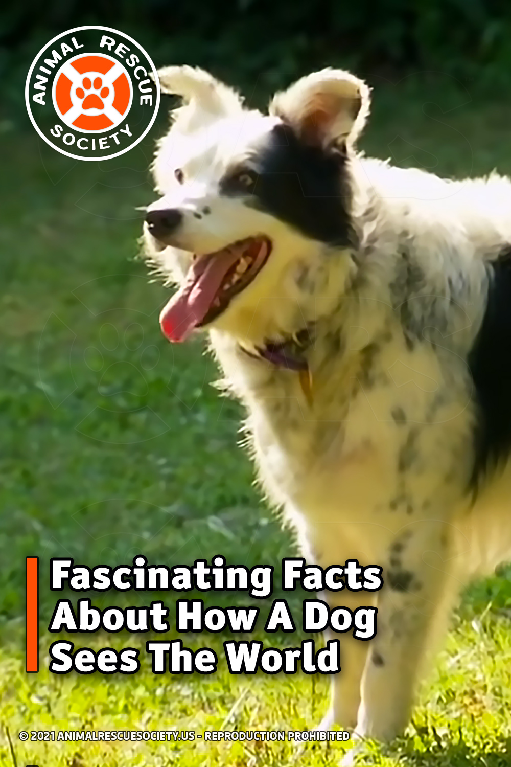 Fascinating Facts About How A Dog Sees The World