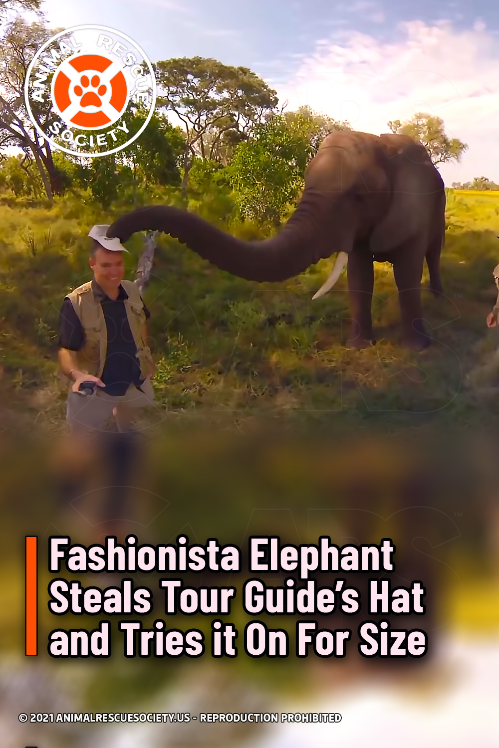 Fashionista Elephant Steals Tour Guide's Hat and Tries it On For Size