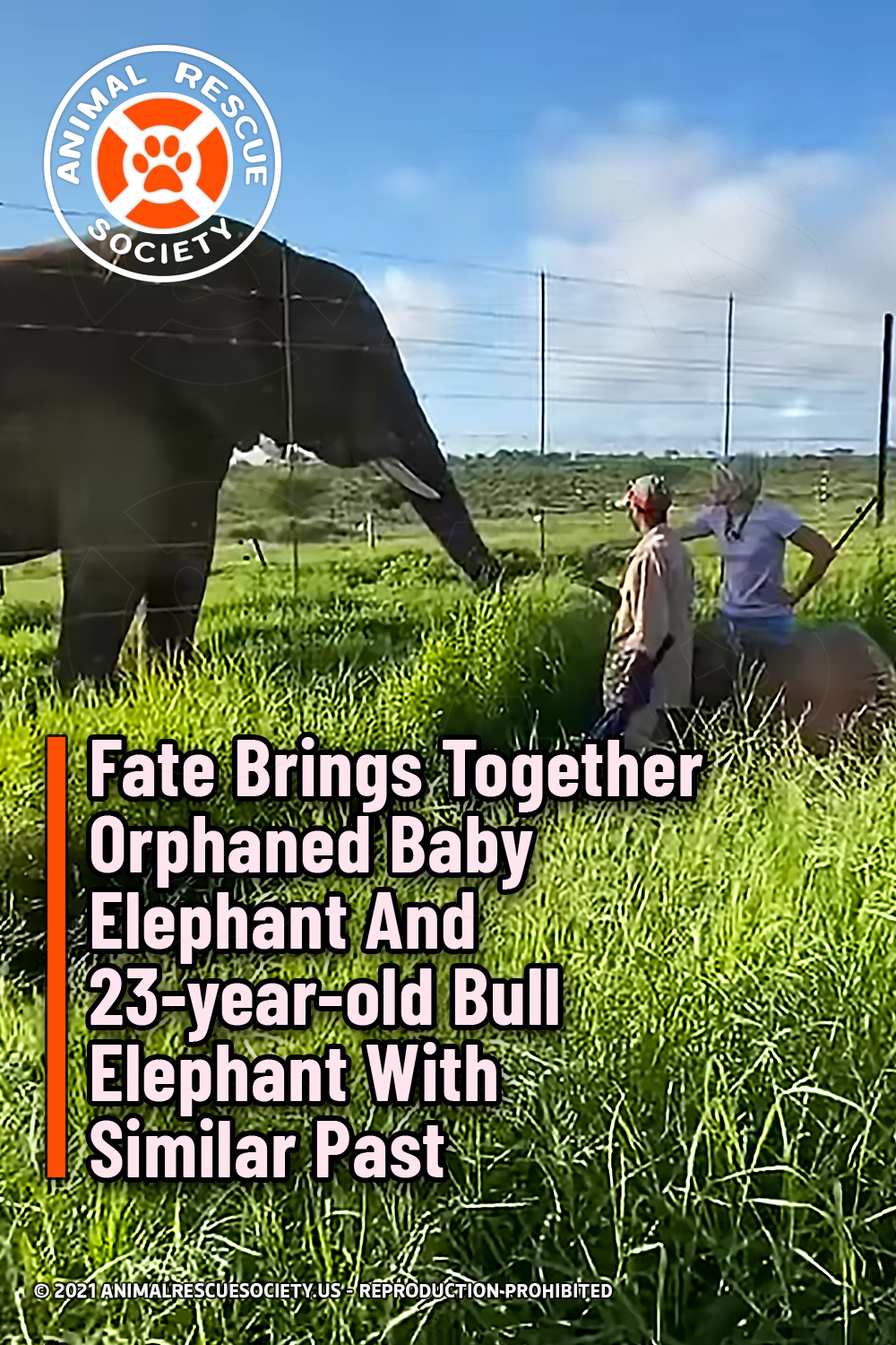 Fate Brings Together Orphaned Baby Elephant And 23-year-old Bull Elephant With Similar Past