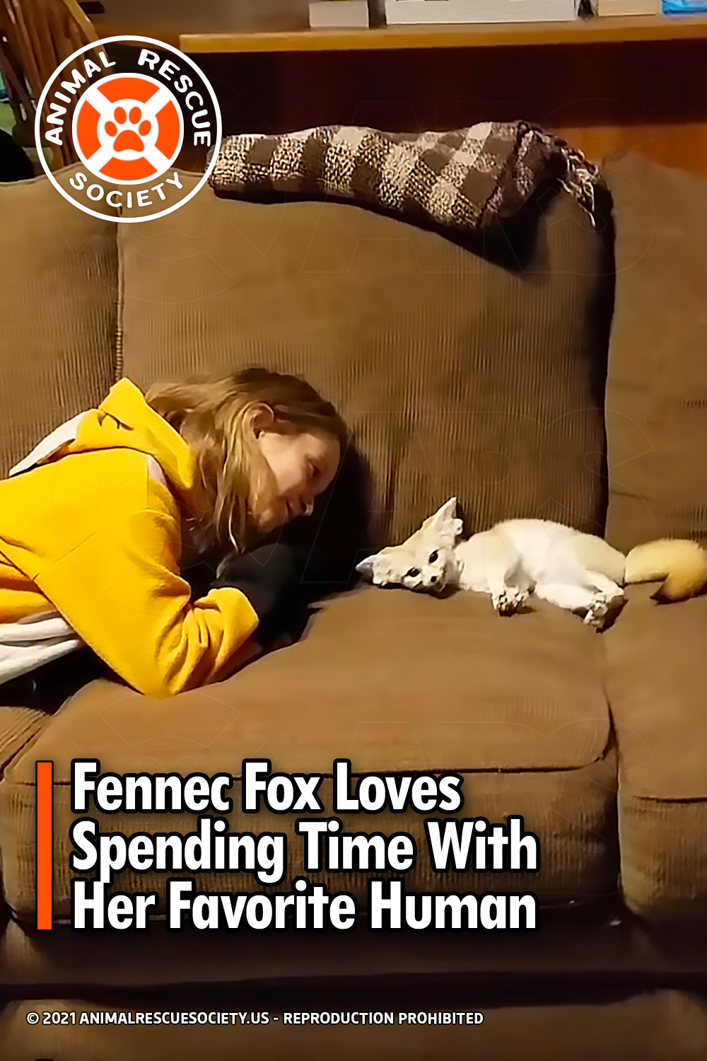 Fennec Fox Loves Spending Time With Her Favorite Human