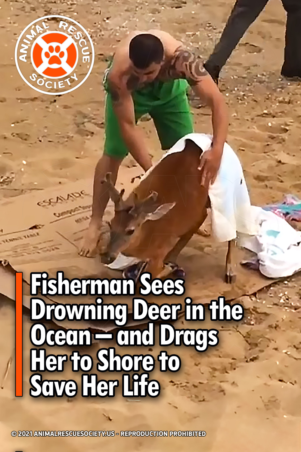 Fisherman Sees Drowning Deer in the Ocean – and Drags Her to Shore to Save Her Life