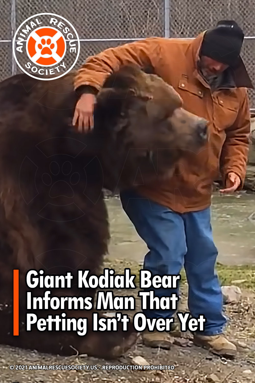 Giant Kodiak Bear Informs Man That Petting Isn't Over Yet