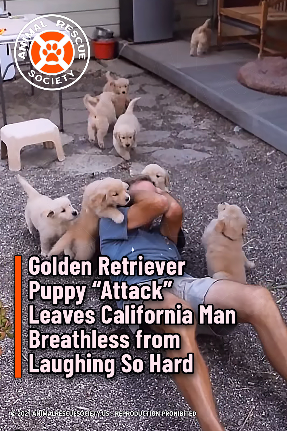 "Golden Retriever Puppy ""Attack"" Leaves California Man Breathless from Laughing So Hard"