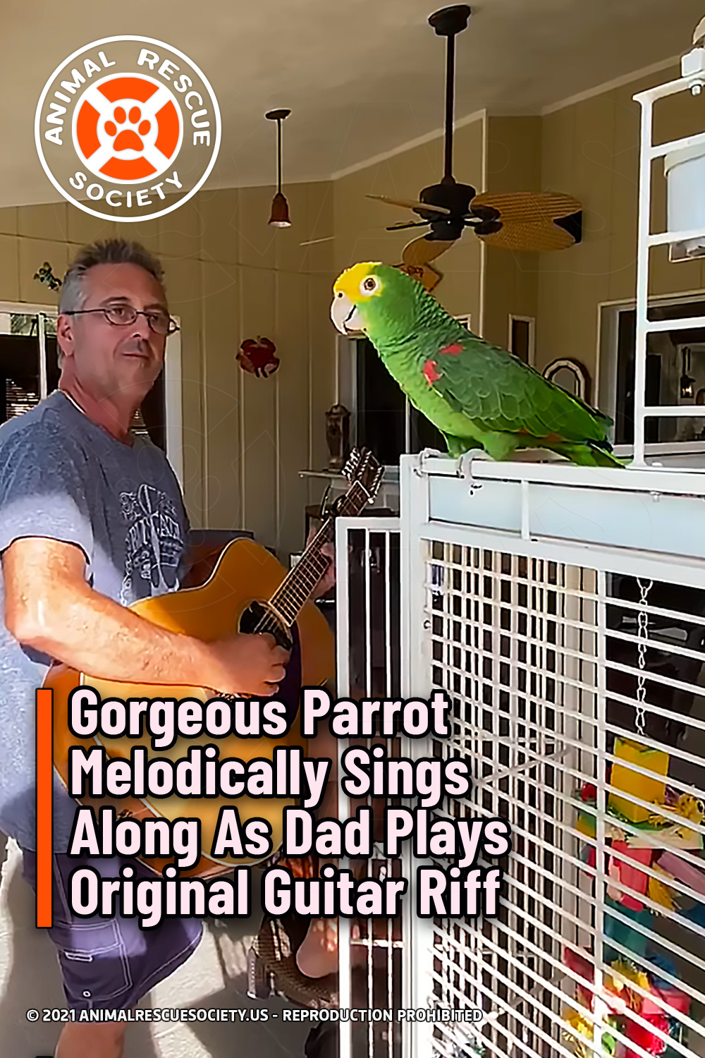 Gorgeous Parrot Melodically Sings Along As Dad Plays Original Guitar Riff