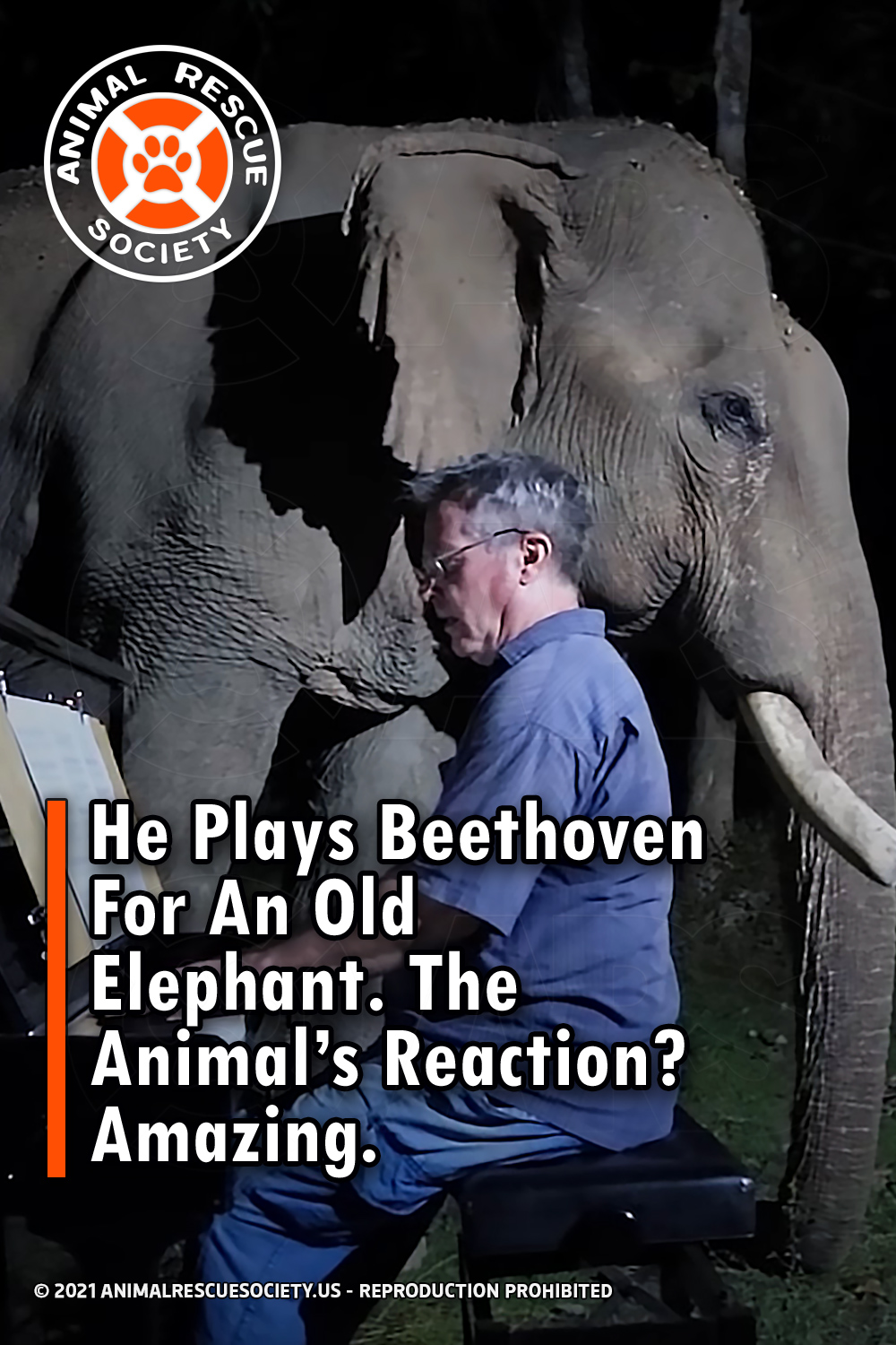 He Plays Beethoven For An Old Elephant. The Animal's Reaction? Amazing.