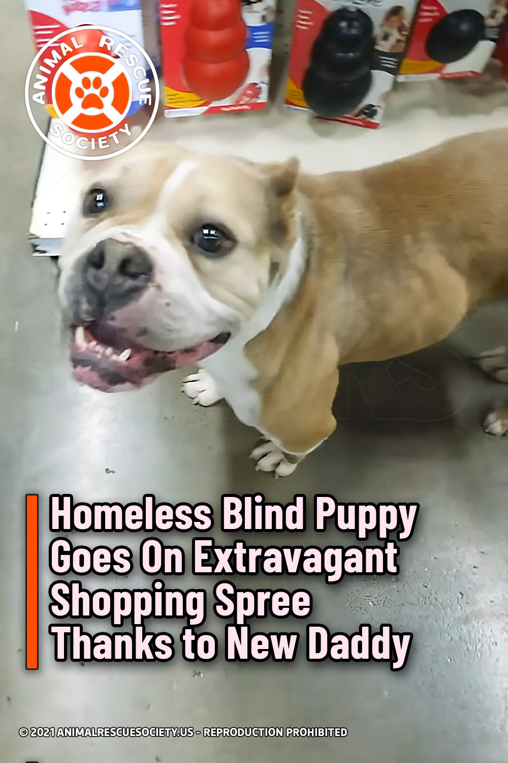 Homeless Blind Puppy Goes On Extravagant Shopping Spree Thanks to New Daddy