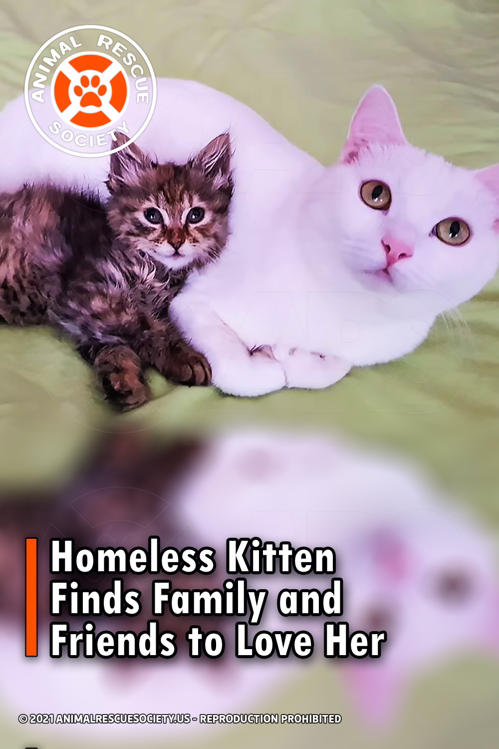 Homeless Kitten Finds Family and Friends to Love Her
