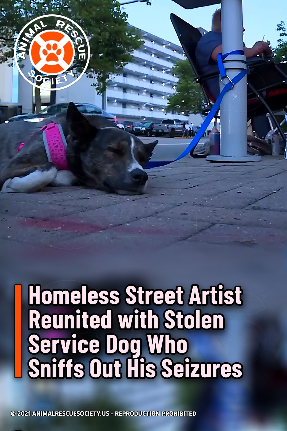 Homeless Street Artist Reunited with Stolen Service Dog Who Sniffs Out His Seizures