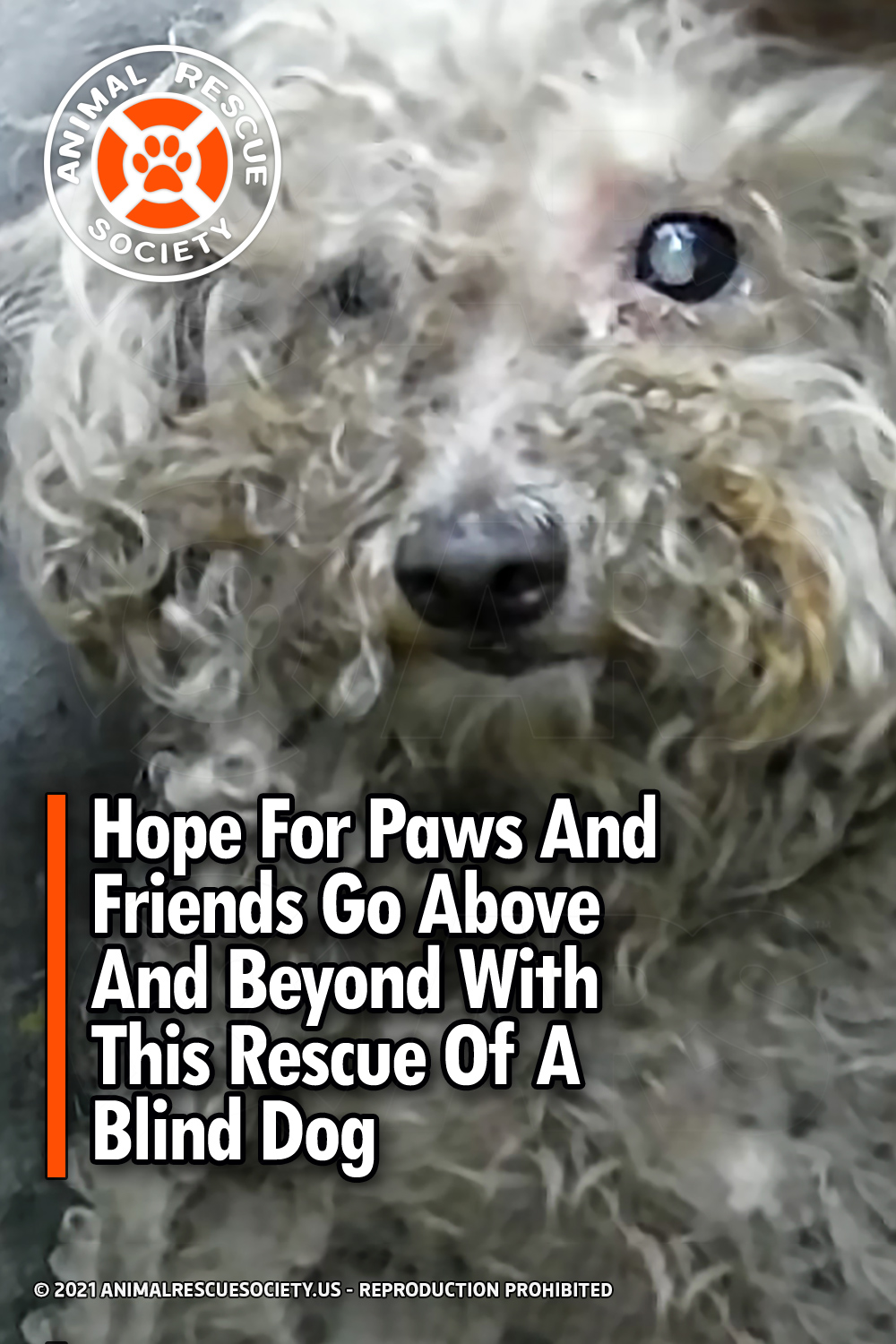 Hope For Paws And Friends Go Above And Beyond With This Rescue Of A Blind Dog