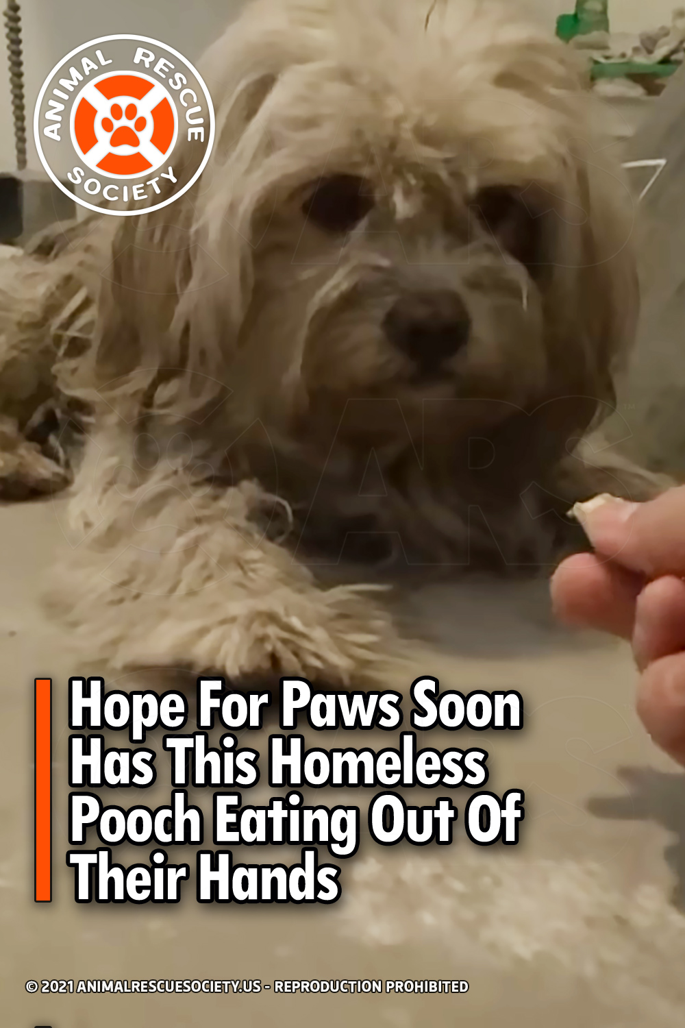 Hope For Paws Soon Has This Homeless Pooch Eating Out Of Their Hands