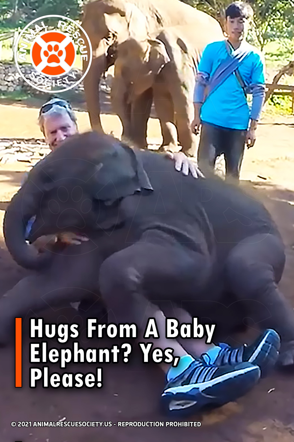 Hugs From A Baby Elephant? Yes, Please!