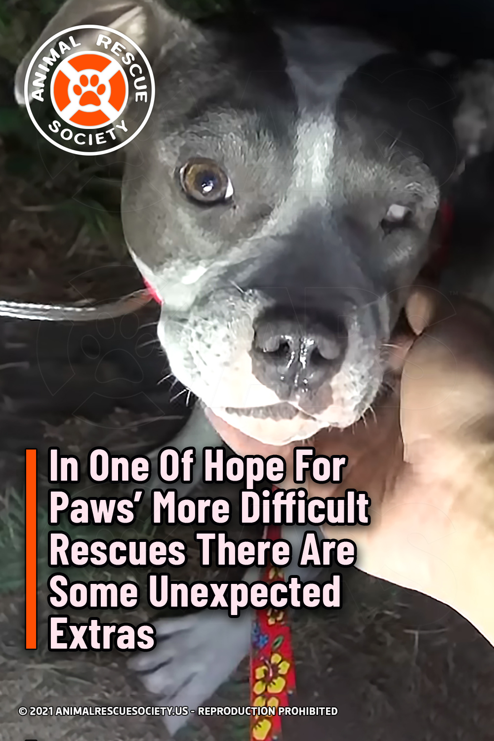 In One Of Hope For Paws' More Difficult Rescues There Are Some Unexpected Extras