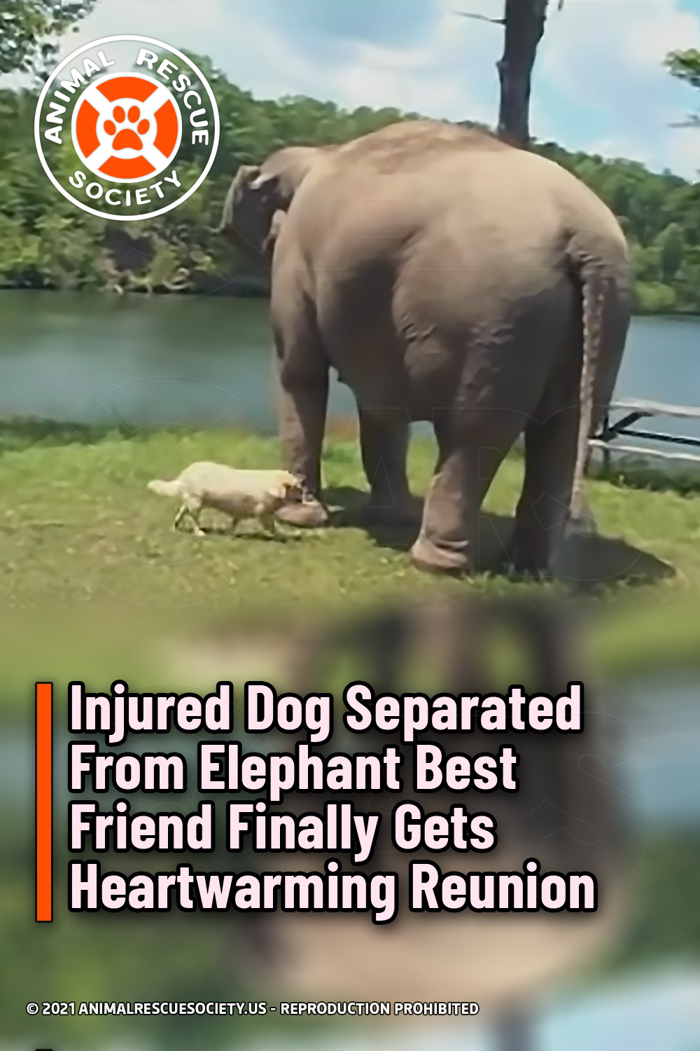 Injured Dog Separated From Elephant Best Friend Finally Gets Heartwarming Reunion