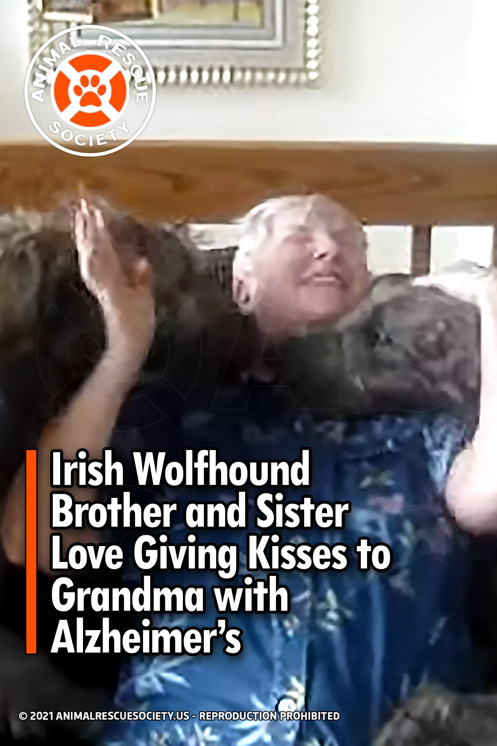 Irish Wolfhound Brother and Sister Love Giving Kisses to Grandma with Alzheimer's