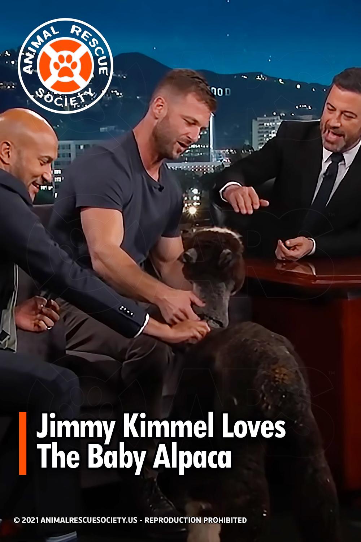 Jimmy Kimmel Loves The Baby Alpaca