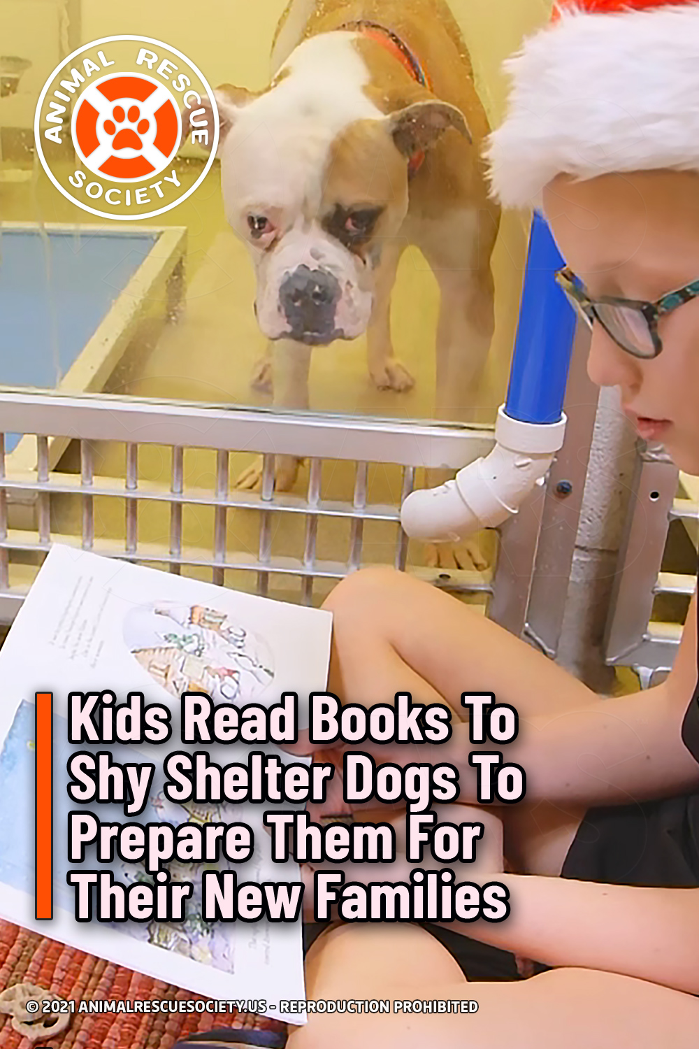 Kids Read Books To Shy Shelter Dogs To Prepare Them For Their New Families