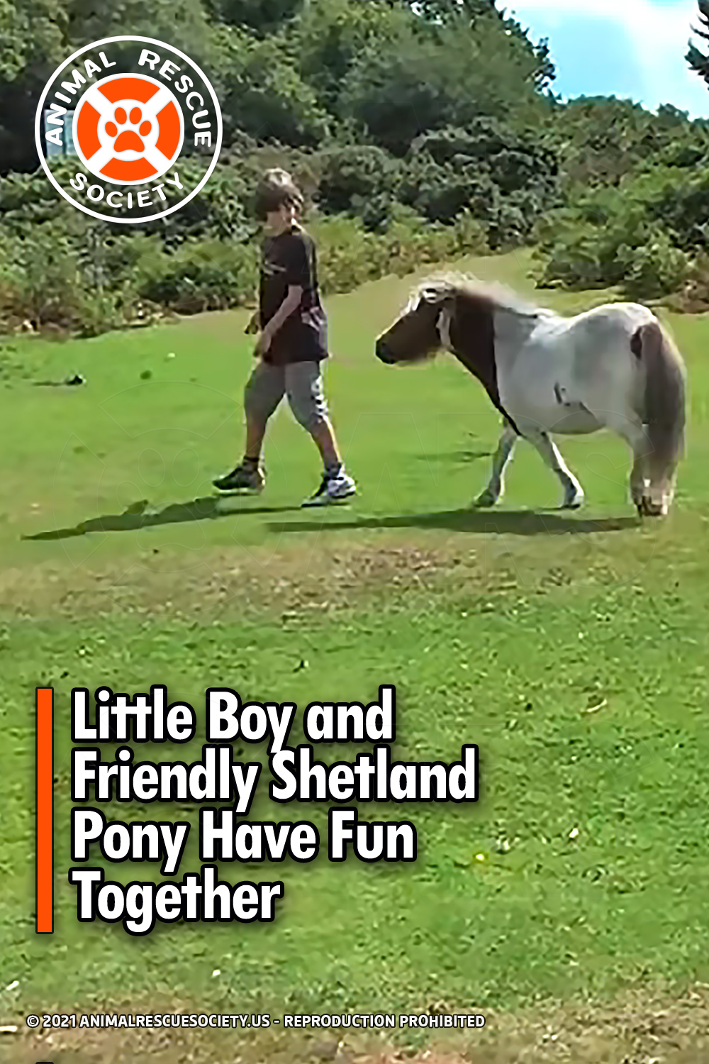 Little Boy and Friendly Shetland Pony Have Fun Together