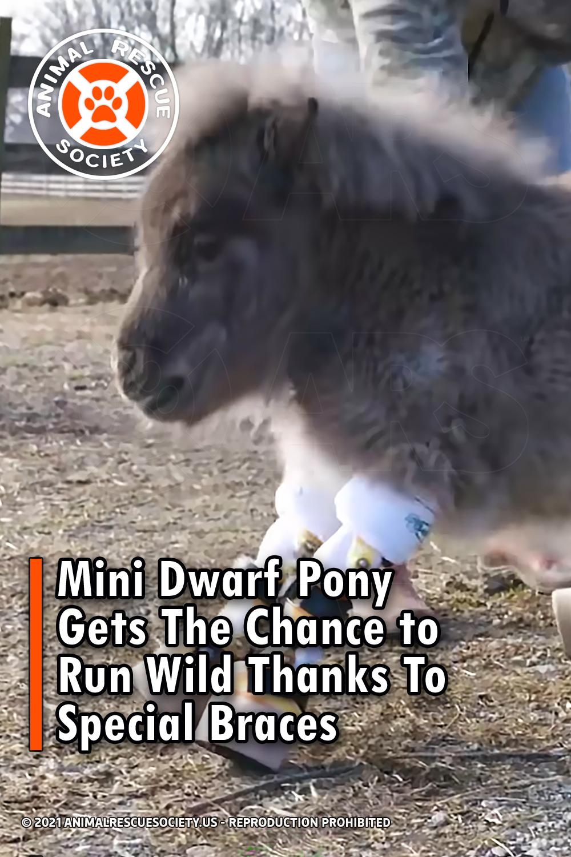 Mini Dwarf Pony Gets The Chance to Run Wild Thanks To Special Braces