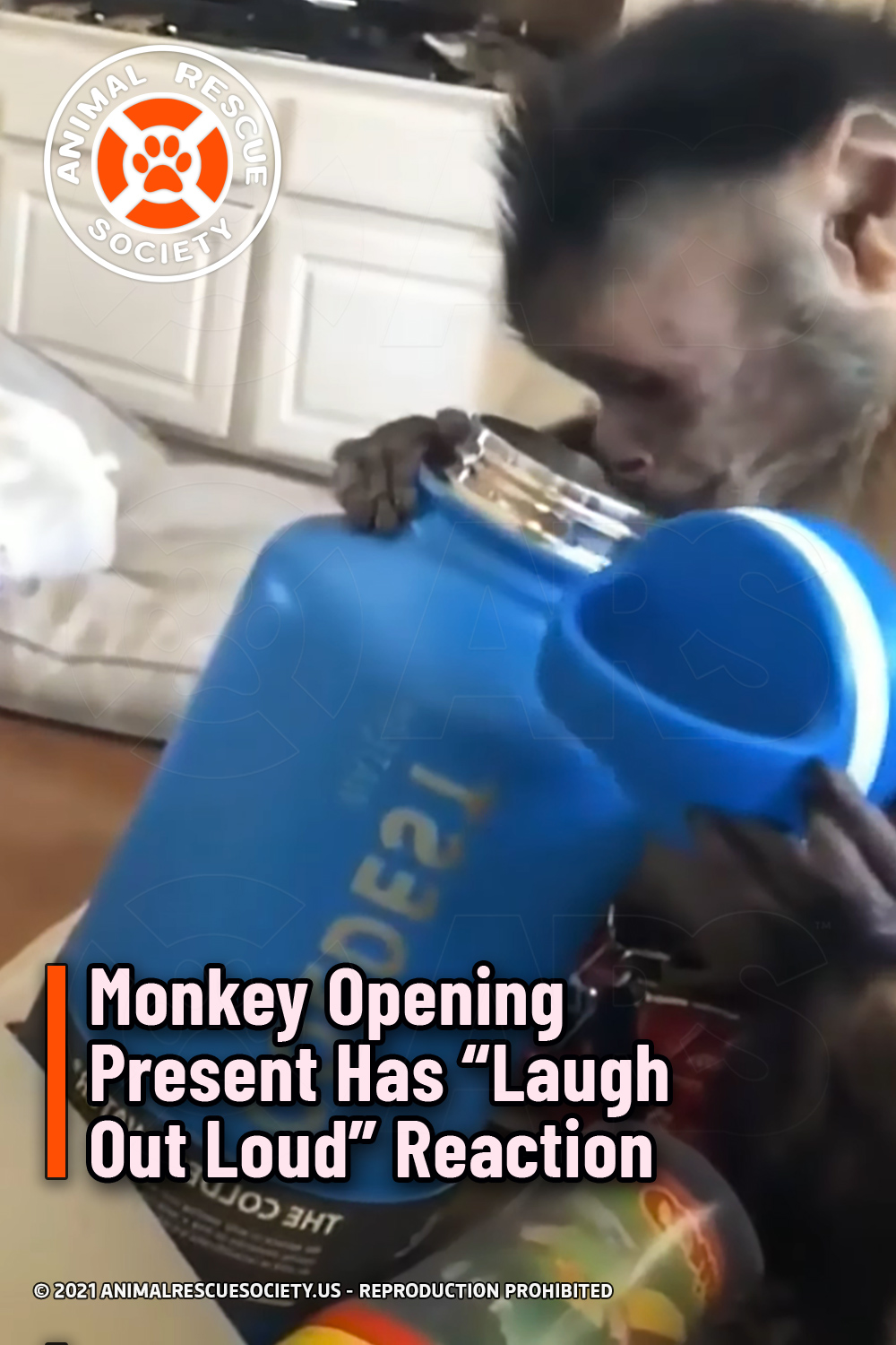 """Monkey Opening Present Has """"Laugh Out Loud"""" Reaction"""