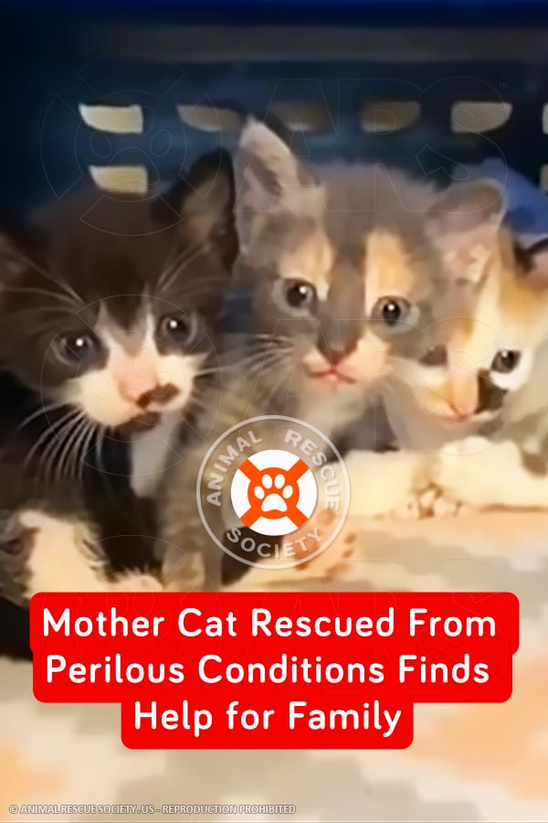 Mother Cat Rescued From Perilous Conditions Finds Help for Family