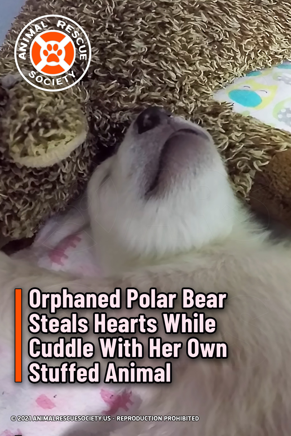 Orphaned Polar Bear Steals Hearts While Cuddle With Her Own Stuffed Animal