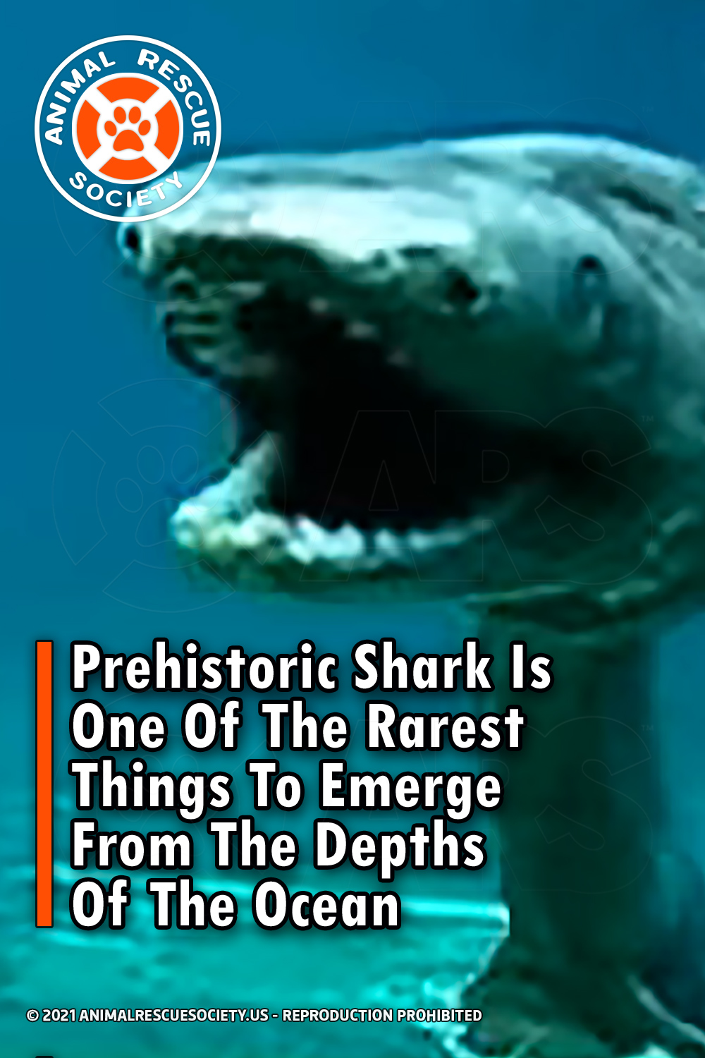 Prehistoric Shark Is One Of The Rarest Things To Emerge From The Depths Of The Ocean
