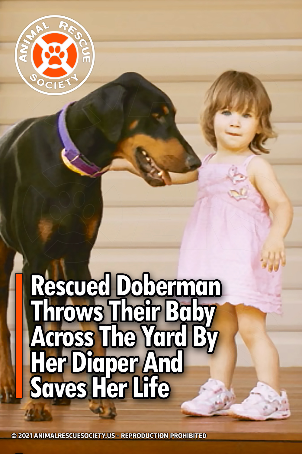 Rescued Doberman Throws Their Baby Across The Yard By Her Diaper And Saves Her Life