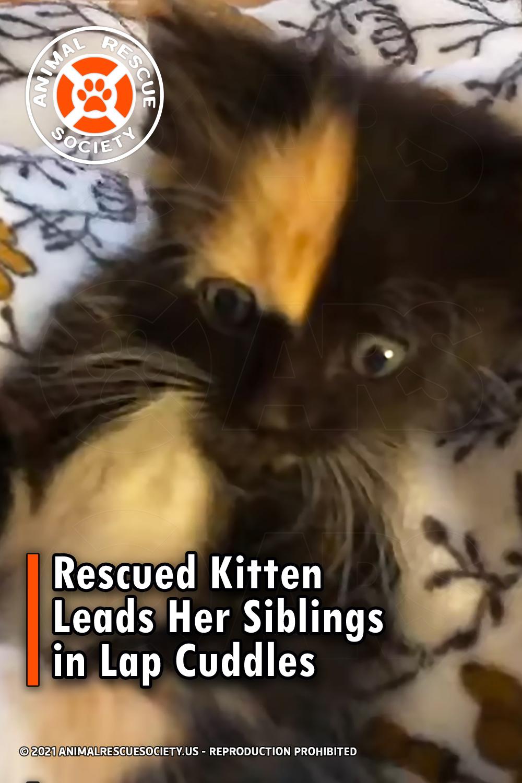 Rescued Kitten Leads Her Siblings in Lap Cuddles