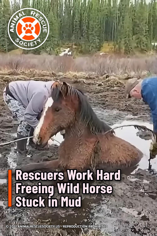 Rescuers Work Hard Freeing Wild Horse Stuck in Mud