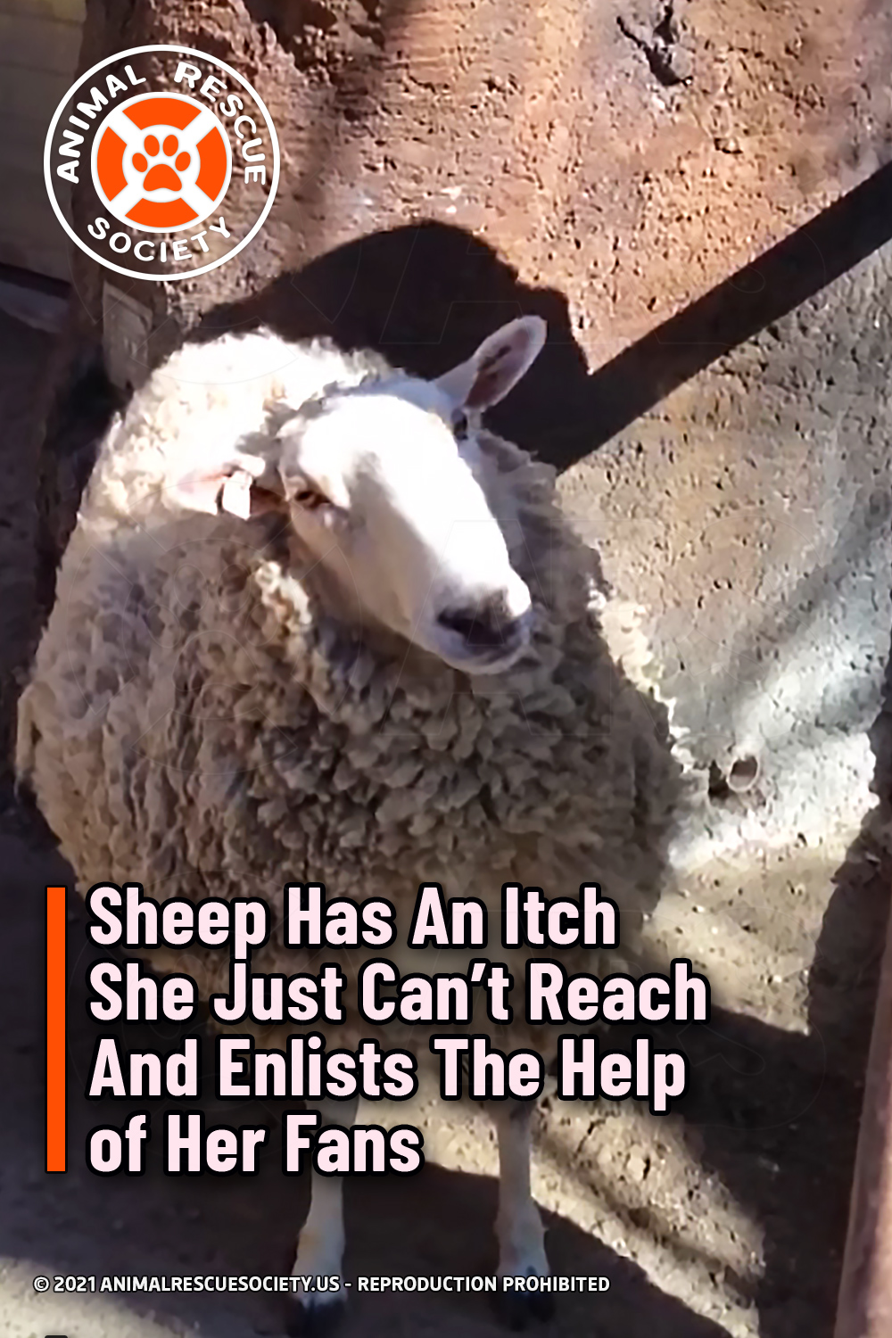 Sheep Has An Itch She Just Can't Reach And Enlists The Help of Her Fans